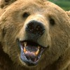 Driver Avoids Moose But Hits Bear